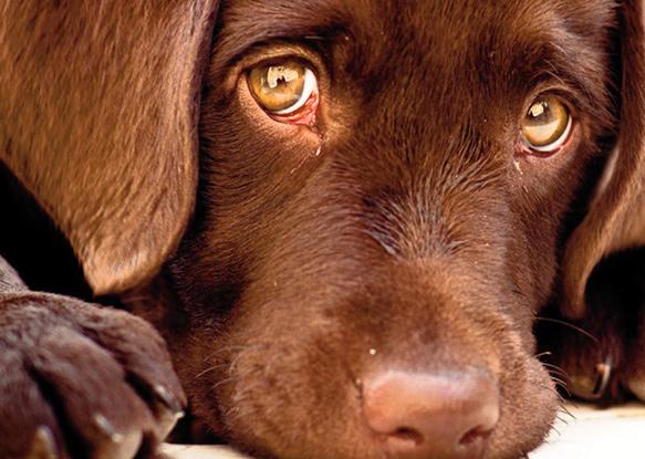 Bien-être animal : une préoccupation croissante